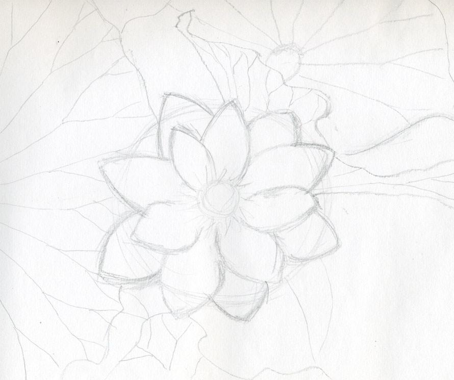 cach ve hoa sen 146