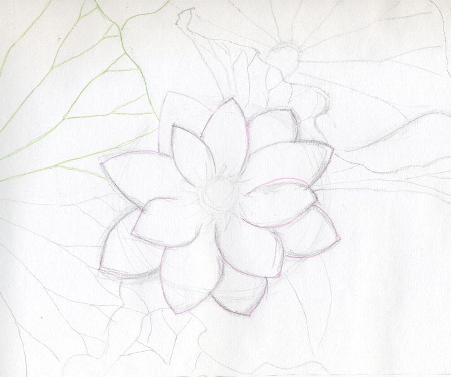 cach ve hoa sen 147