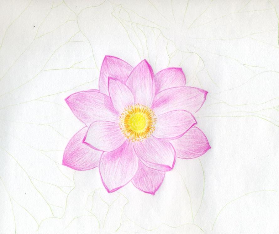 cach ve hoa sen 151