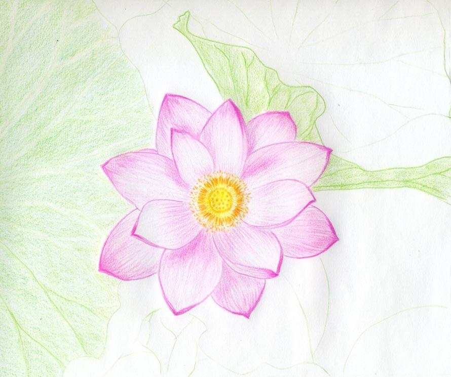 cach ve hoa sen 153