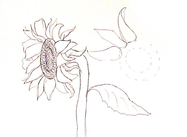 vẽ tranh hoa huong duong 120