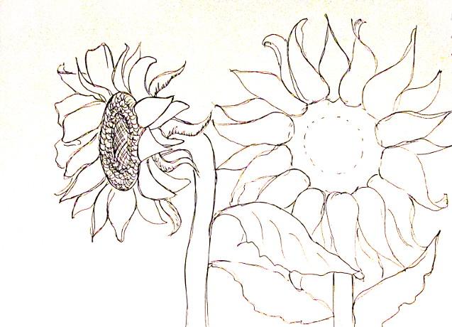 vẽ tranh hoa huong duong 122