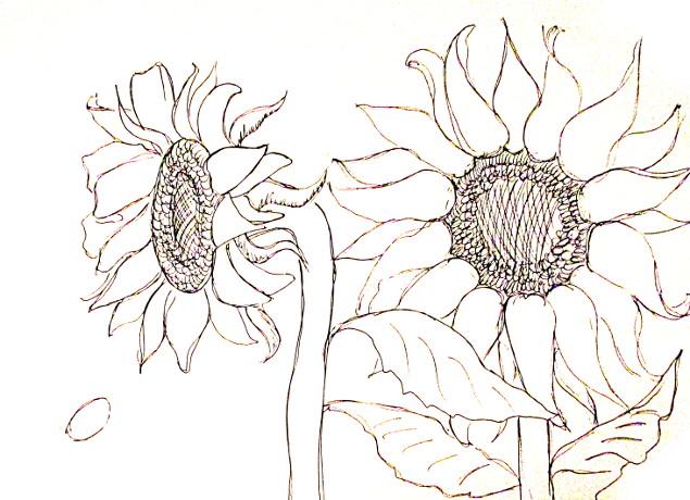vẽ tranh hoa huong duong 123