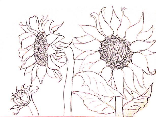 vẽ tranh hoa huong duong 125