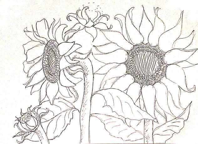 vẽ tranh hoa huong duong 127