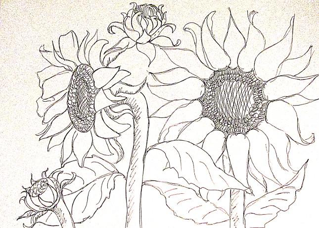 vẽ tranh hoa huong duong 128