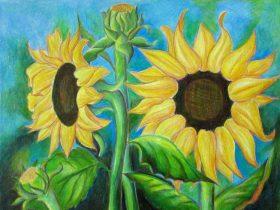vẽ tranh hoa huong duong 130 1
