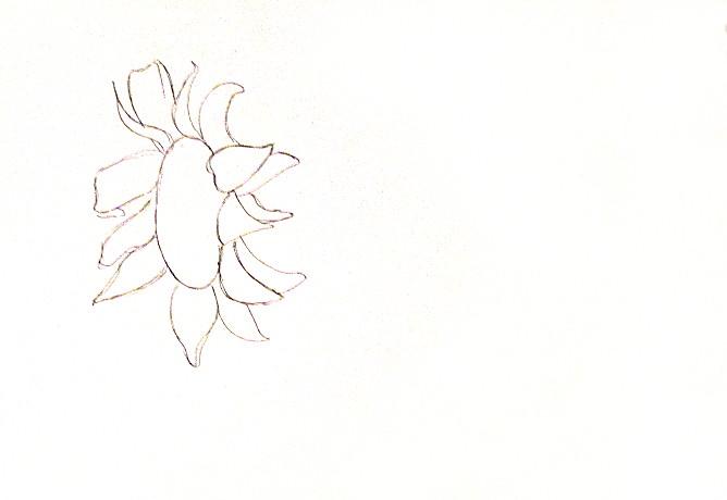 vẽ tranh hoa huong duong 14
