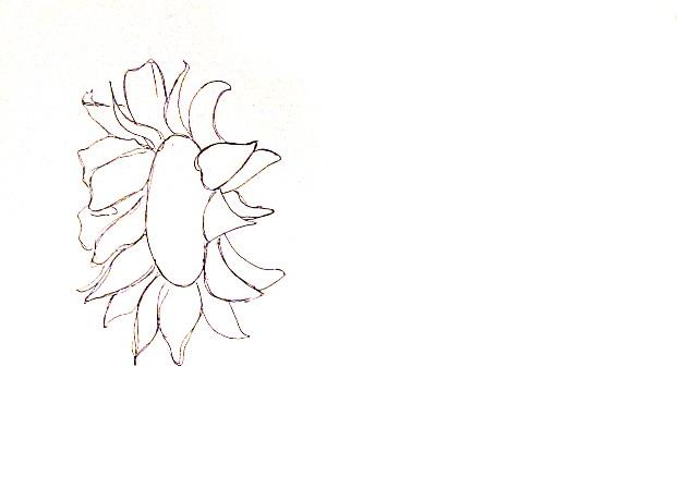 vẽ tranh hoa huong duong 15