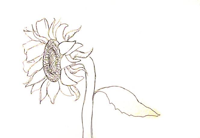 vẽ tranh hoa huong duong 18