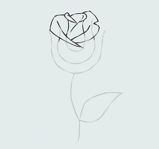 ve tranh hoa hong 13
