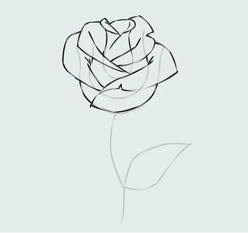 ve tranh hoa hong 15